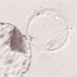 妊娠を希望・不妊治療